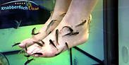 Gutschein für Ihr Gutschein für die ganz besondere Fußmassage von Knabberfisch Oase