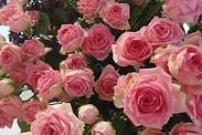 Gutschein für Blumen sind unsere Leidenschaft von Rosen (t) raum