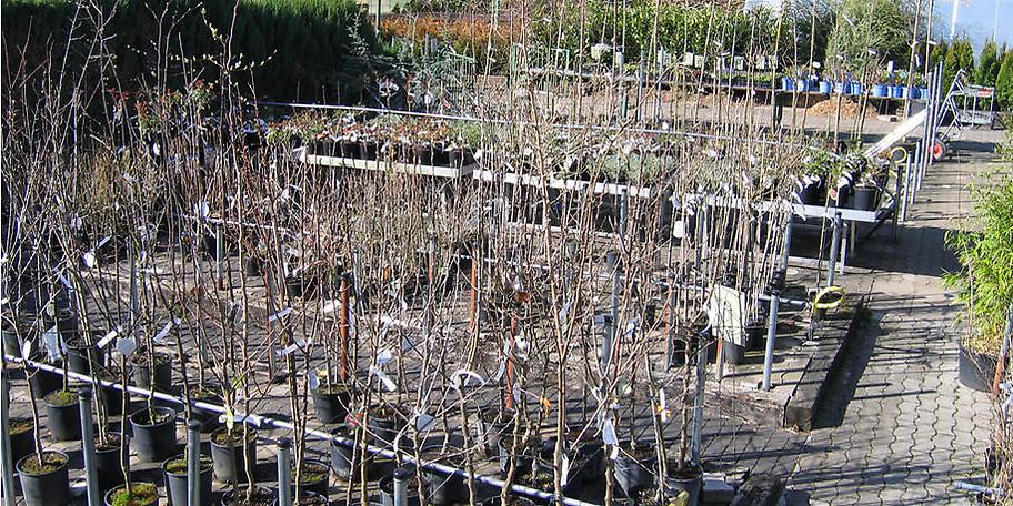 Willkommen bei Bethlehem Gartenbau