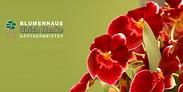 Gutschein für Blumen sind die schönsten Worte! von Blumenhaus Ulrich Menke