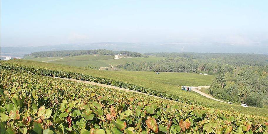 Das Weingut erstreckt sich über 45 Hektar auf den ausgedehnten und sonnigen Hügeln von Les Riceys