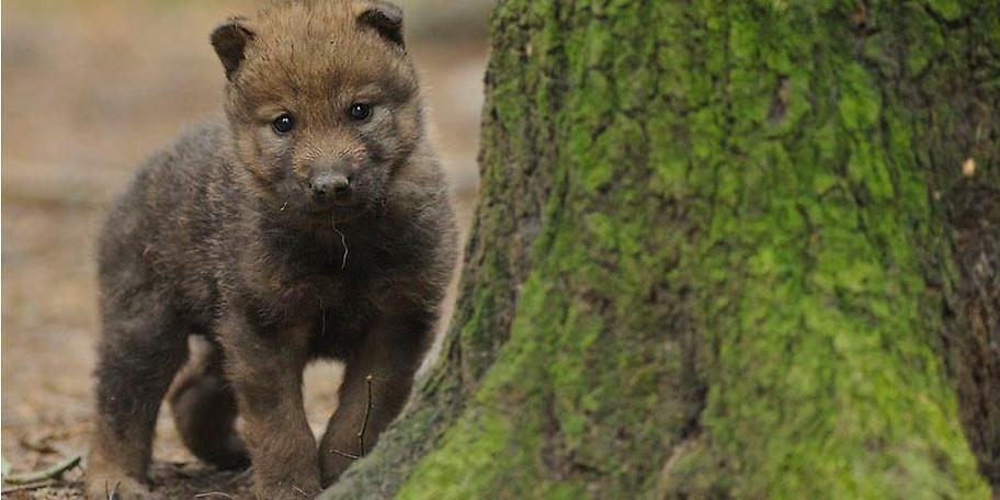Auf einem 4 km langen Wald- und Wiesenwanderweg kann man die verschiedensten Tiere beobachten