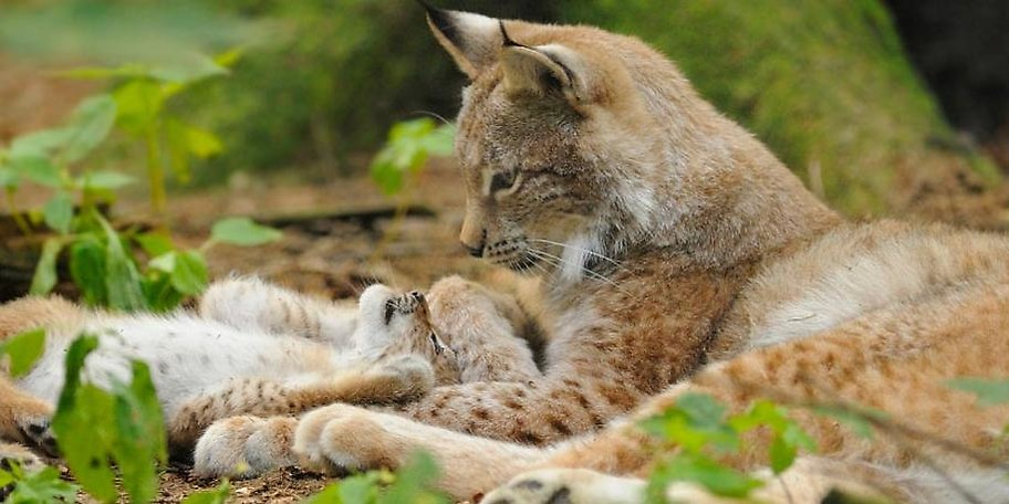 Der Wildpark Poing bietet ganzjährig die Möglichkeit, einheimische Arten aus der Nähe zu beobachten