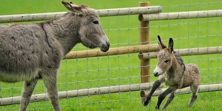 Viele Tiere im Wildpark Poing lassen sich streicheln oder sogar füttern