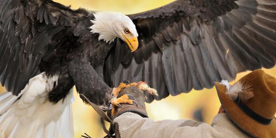 Die Greifvogel-Vorführung im Wildpark Poing