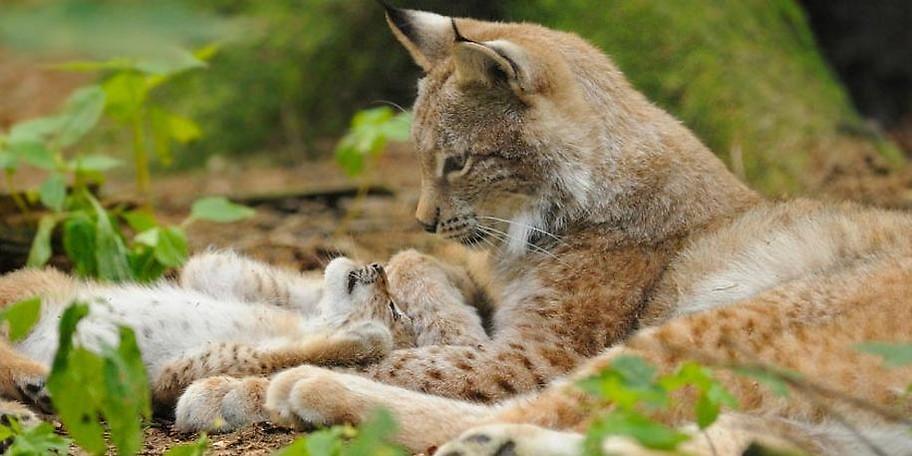 Beobachten Sie einheimische Wildarten aus nächster Nähe