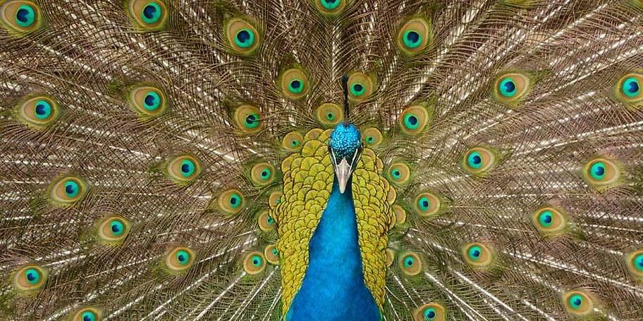 Das Besondere am Wildpark Poing ist die naturnahe Gestaltung der einzelnen Gehege