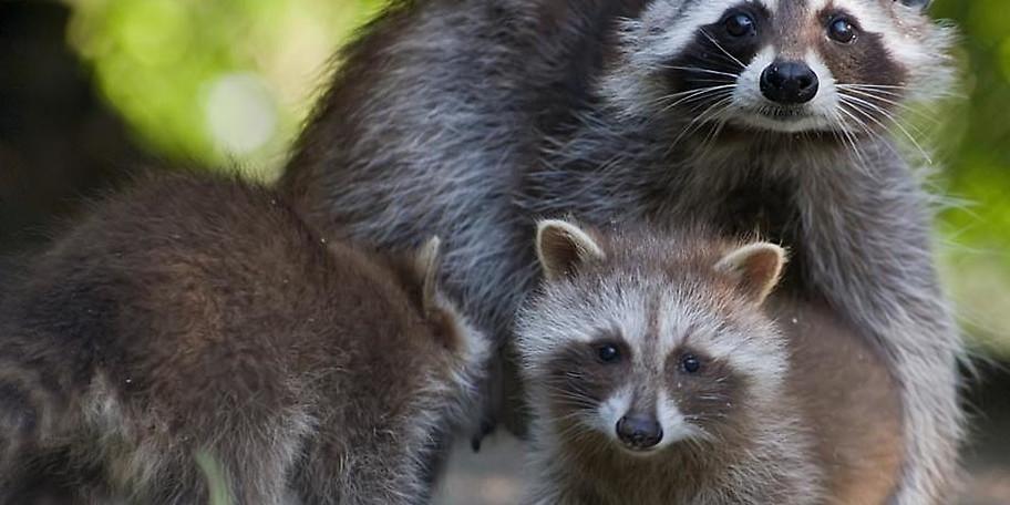 Machen Sie sich selbst ein Bild von unseren Tieren im Wildpark Poing