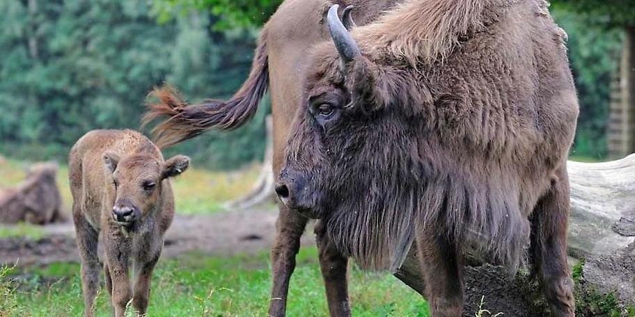 Auf einem Wald- und Wiesenwanderweg kann man die verschiedensten Tiere in Ihrer natürlichen Umgebung beobachten