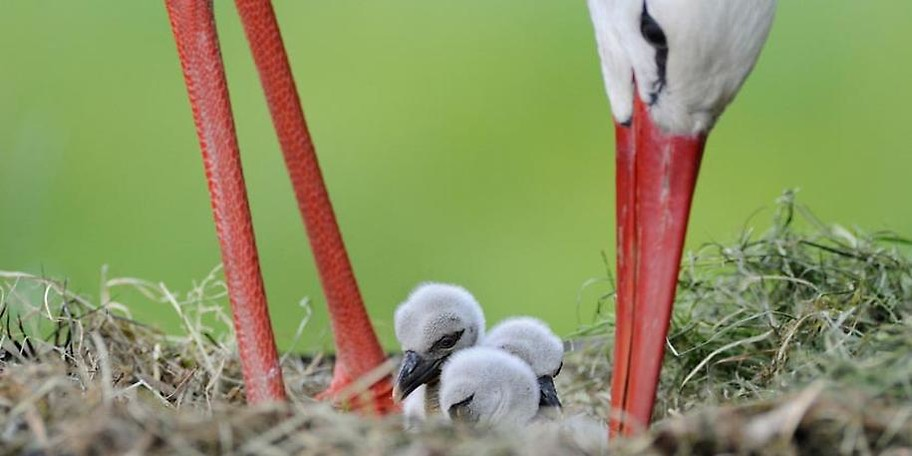 Der Wildpark Poing ist das perfekte Ausflugsziel für die ganze Familie