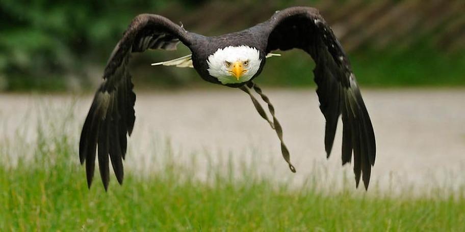 Der Wildpark Poing ist der wildreichste Park Deutschlands