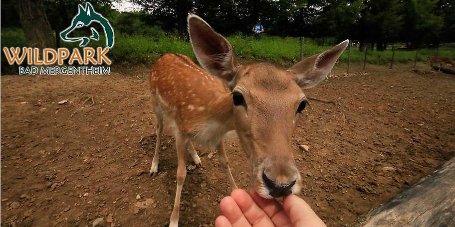 """Wildpark Bad Mergentheim: """"Tiere sehen und erleben"""""""