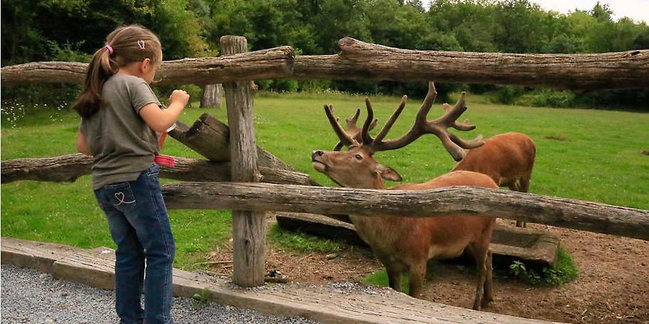 Im eigenen Wildpark-Kindergarten erleben schon die Kleinsten die Faszination der Natur