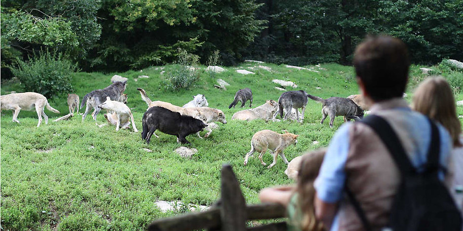 Ein besonderes Highlight eines jeden Besuches sind die spannenden Tierparkführungen